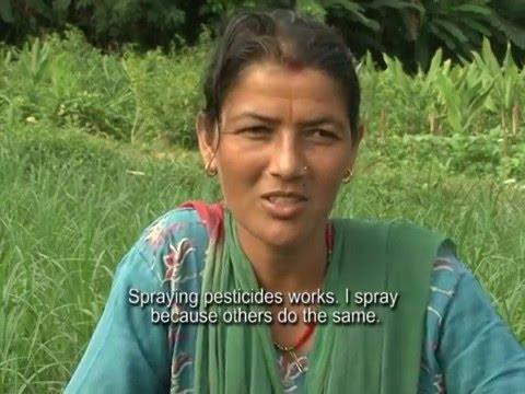 Embedded thumbnail for Commercial Vegetable Production: Farmers at pesticide risks